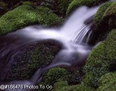 Stream & moss