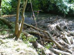 creek5.jpg