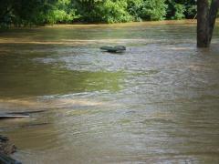 flood016.jpg