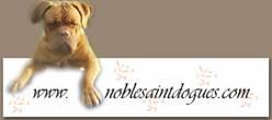 noblesaint_banner.jpg