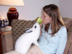 300px-rabbit_sharing_apple.jpg