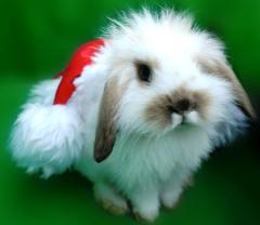 santa-bunny.jpg