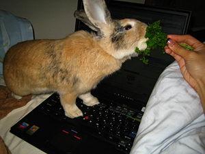 300px-rabbiteating.jpg
