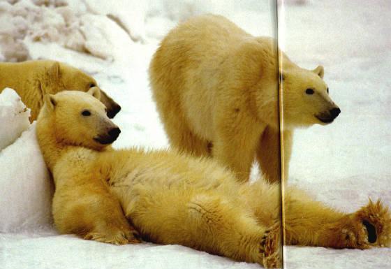 bearchillin.jpg