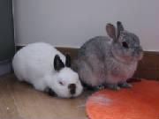 bunny_bow.jpg