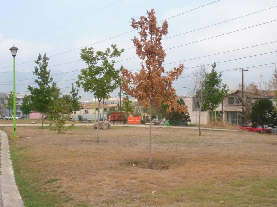 Árbol seco por las heladas 2010